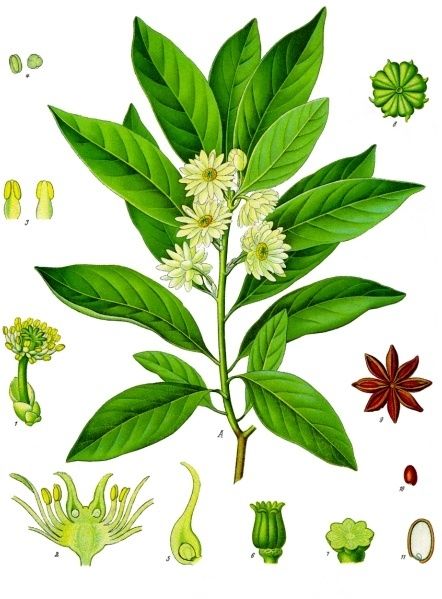 Image of Anise oil, Star, China