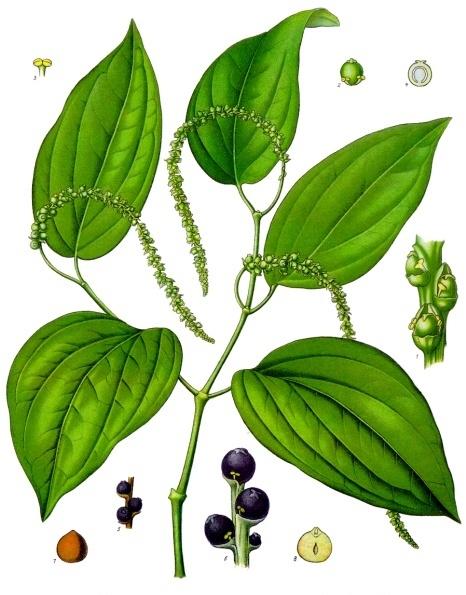 Image of Pepper oil, Black, Madagascar