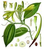 Image of Vanilla Oleoresin, Madagascar